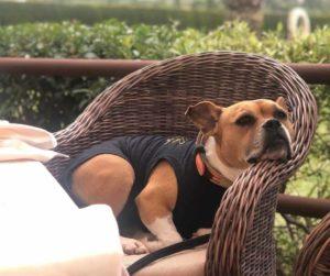 CASA COLINE - JAVEA RESTAURANTS - VALL DE CAVALL -dogs allowed 9